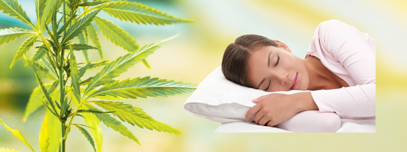 How Does CBD Oil Affect Paradoxical Sleep